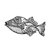 Sea Life FISH (7)