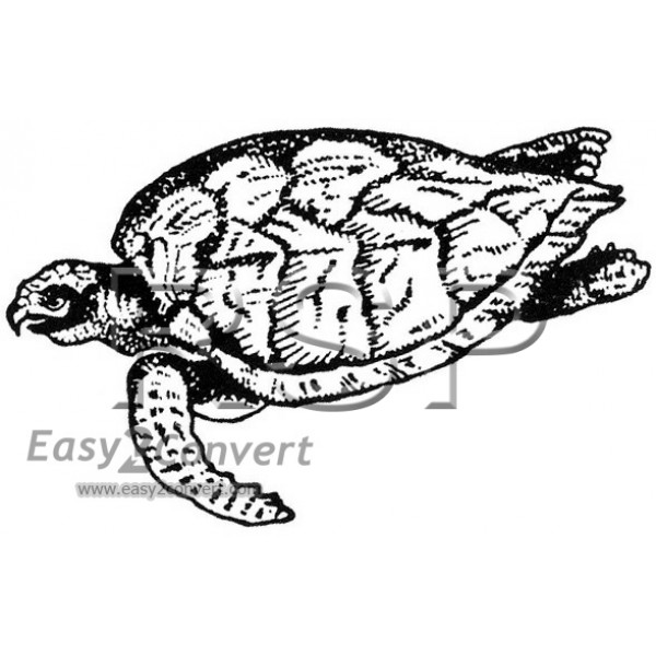 Honu petroglyph coloring pages ~ STAMP Honu Sea Turtle