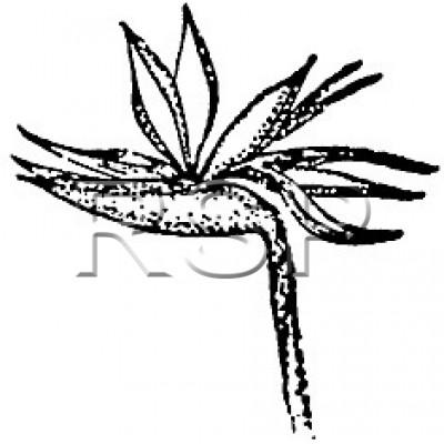 STAMP Bird of Paradise Flower