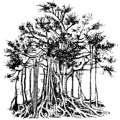 STAMP Banyan